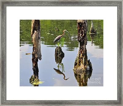 Tricolored Reflection Framed Print
