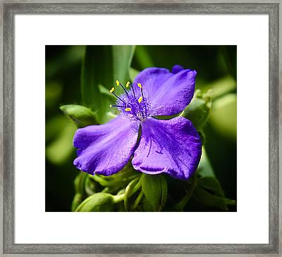 Trillium Knockout Framed Print by Michael Putnam