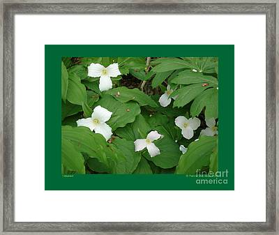 Framed Print featuring the photograph Trilliums-i by Patricia Overmoyer