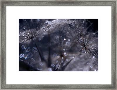 Nature's Trinkets Framed Print