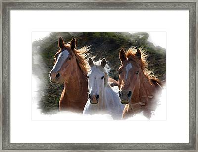 Framed Print featuring the photograph Trio by Judy Deist