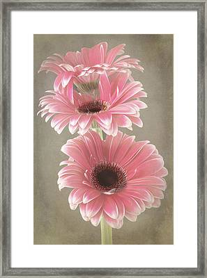 Triple Beauty Framed Print by Fiona Messenger