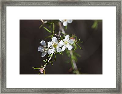 Framed Print featuring the photograph Triple Blossom by Carole Hinding
