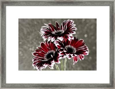 Triple Gerbera Fractalius Framed Print by Fiona Messenger