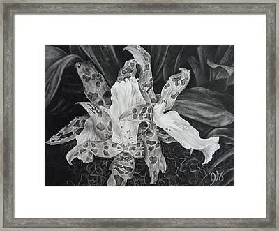 Triple Orchid Blossom Framed Print by Estephy Sabin Figueroa