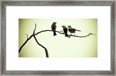 Triplets Framed Print