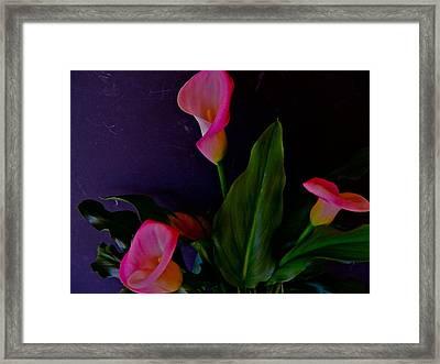 Triplets Of Calla Lilies Framed Print by Randy Rosenberger