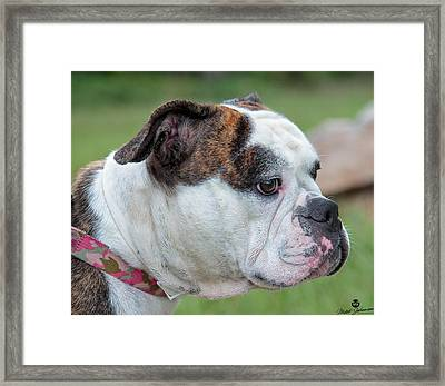 Trixie On Lookout Framed Print
