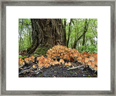 Trooping Crumblecaps Framed Print