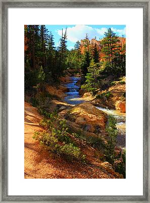 Tropic Ditch Stream Framed Print by Sonya Anthony