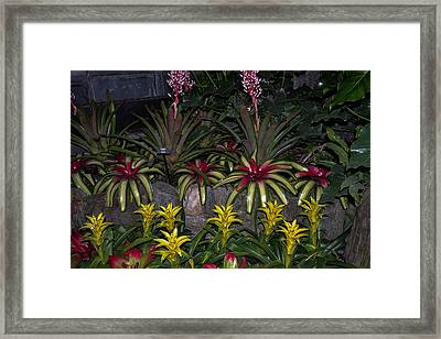 Tropical 1 Framed Print by Wanda J King