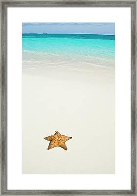 Tropical Beach And Starfish Framed Print