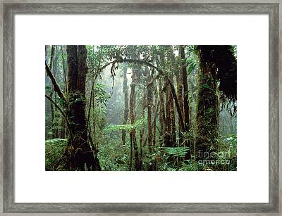 Tropical Cloud Forest Framed Print by Gregory G. Dimijian