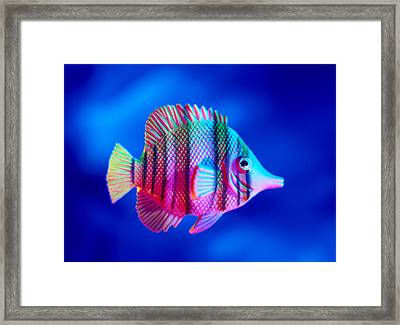 Tropical Fish Close-up Framed Print by Lawrence Lawry