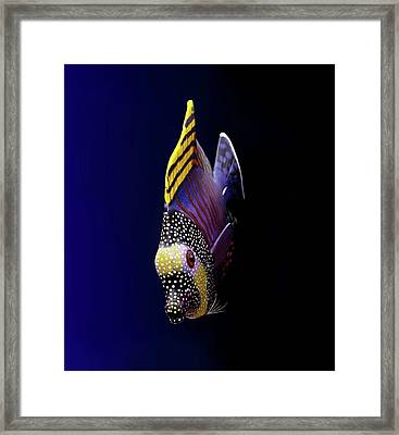 Tropical Fish Framed Print by Pieceoflace Photography