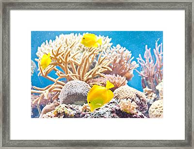 Tropical Fish Framed Print by Tom Gowanlock