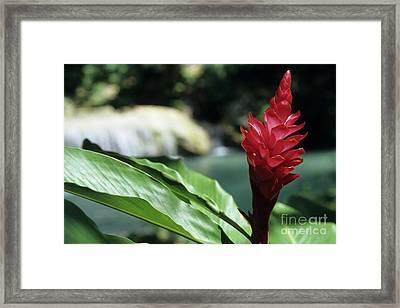 Tropical Garden Red Flower Framed Print by Sami Sarkis