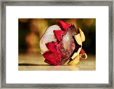 Tropical Mangosteen - Ready To Eat Framed Print