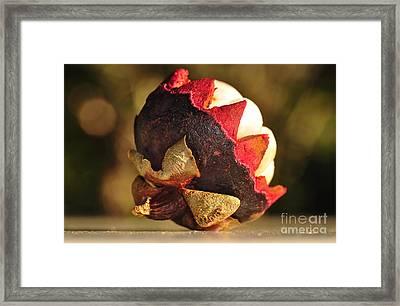 Tropical Mangosteen - The Medicinal Fruit Framed Print by Kaye Menner