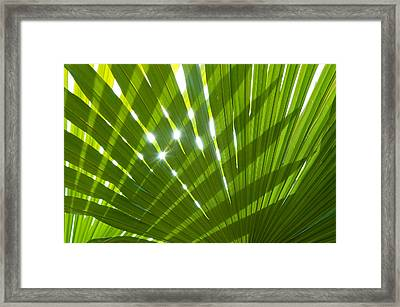 Tropical Palm Leaf Framed Print by Amanda Elwell