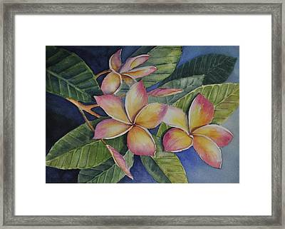 Tropical Plumerias Framed Print by Sandy Fisher