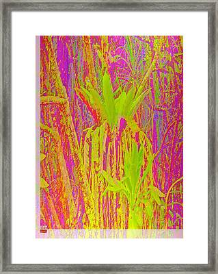 Tropical Rush Framed Print by Charles Hansen
