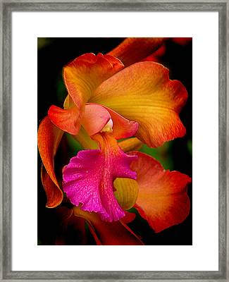 Tropical Splendor Framed Print by Blair Wainman