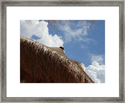 Tropical Straw Umbrella Framed Print by Kimberly Perry