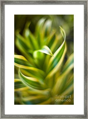 Tropical Swirl Framed Print by Mike Reid