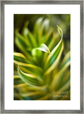 Tropical Swirl Framed Print