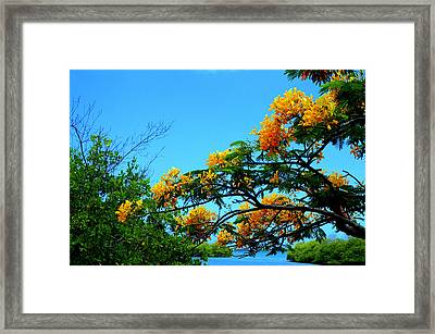 Tropics Framed Print by Mauricio Jimenez
