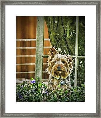 Trouble Again Framed Print by DMSprouse Art