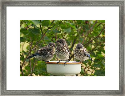 Trouble Times Three Framed Print by Bill Pevlor
