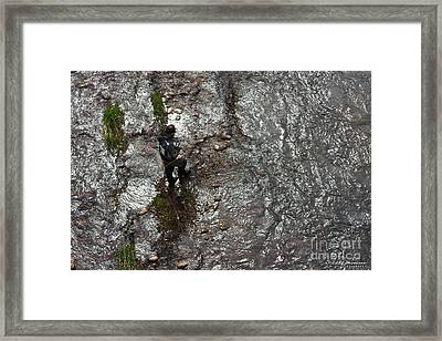 Trout Fishing Framed Print
