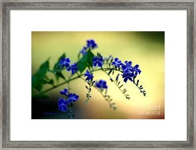 Tru Blu Framed Print