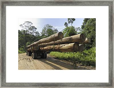 Truck With Timber From A Logging Area Framed Print