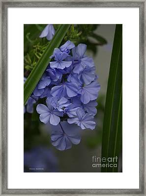 True Blue Framed Print
