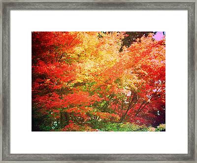True Colors Framed Print by Lee Yang