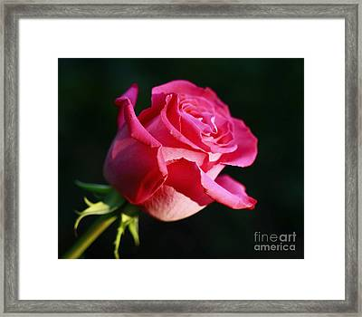 Truly Inspired Framed Print by Inspired Nature Photography Fine Art Photography