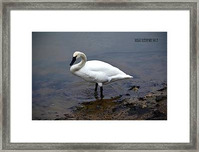Framed Print featuring the photograph Trumpeter Tom by Brian Stevens