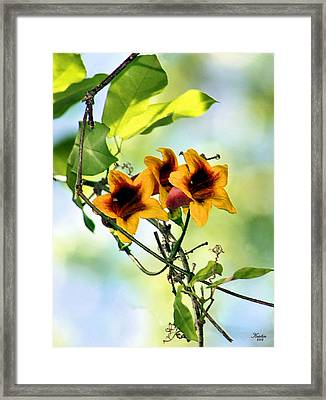 Trumpeting Spring Framed Print by Kristin Elmquist