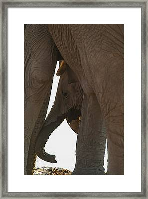 Trunk Touch Framed Print