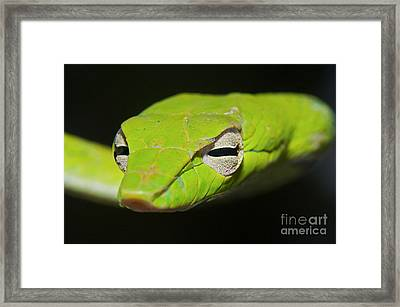 Trust In Me Framed Print