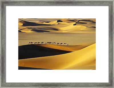 Tuareg Nomads With Camels In Sand Dunes Of Sahara Desert, Arakou Framed Print by Johnny Haglund