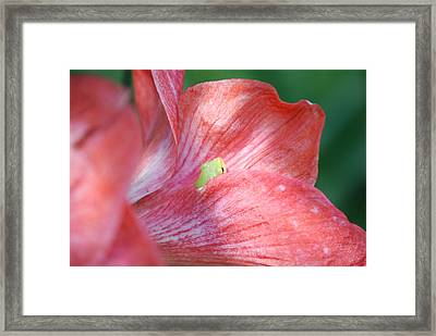 Tucked In Red Framed Print by Kathy Gibbons
