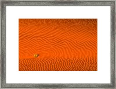 Tuft Framed Print