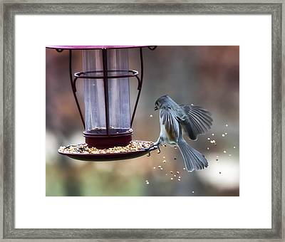 Tufted Seed Splash Framed Print by Bill Tiepelman
