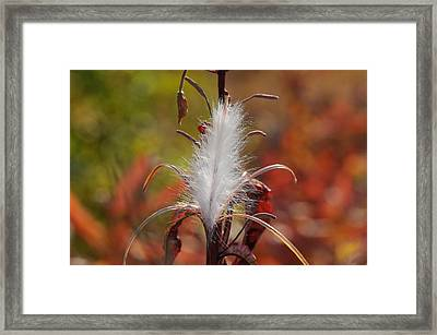 Tufted Seeds Of The Fireweed Plant Framed Print