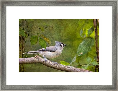 Tufted Titmouse In The Forest Framed Print by Bonnie Barry
