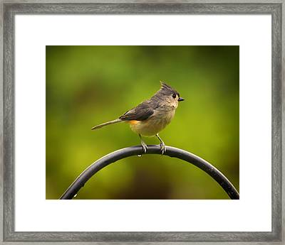 Tufted Titmouse On Pole Framed Print by Bill Tiepelman